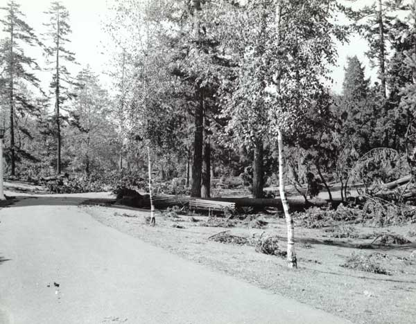 1962 Columbus Day Storm damage in Washington Park