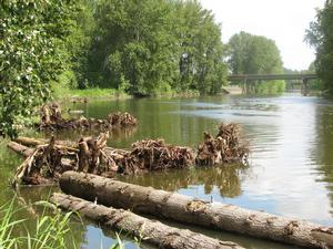 learn all about the columbia slough watershed and its